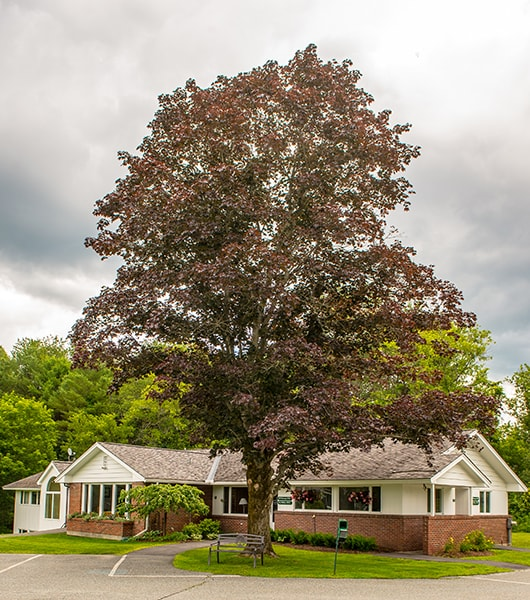Mobile image of the building of Lyme Road Dental with each dentist in Hanover NH