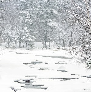 Snowy scene in New Hampshire woods.